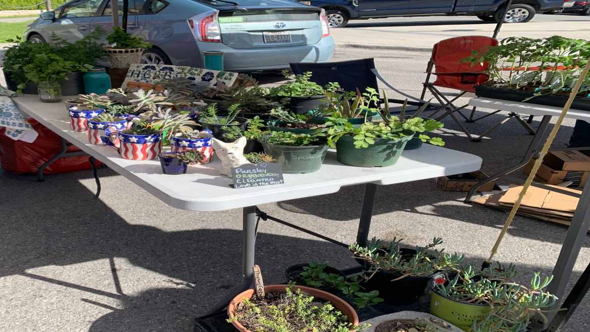 pots and plants for sale at the farmers' market