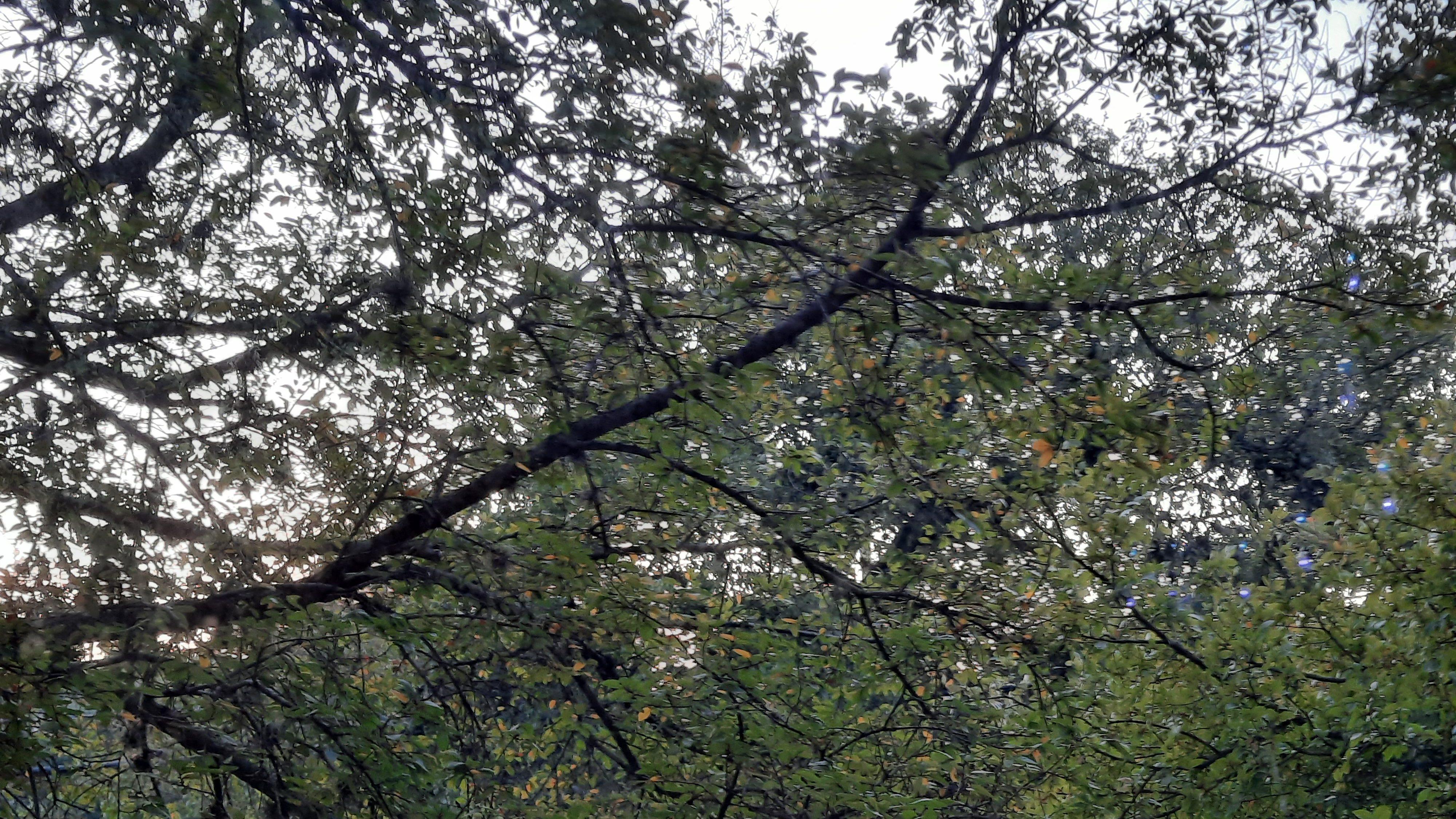 How to Ensure a Joyous Fall