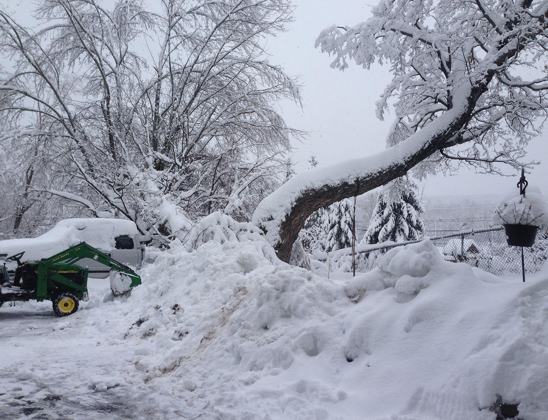 Tree Removal Services Albany, NY - KT Tree Services