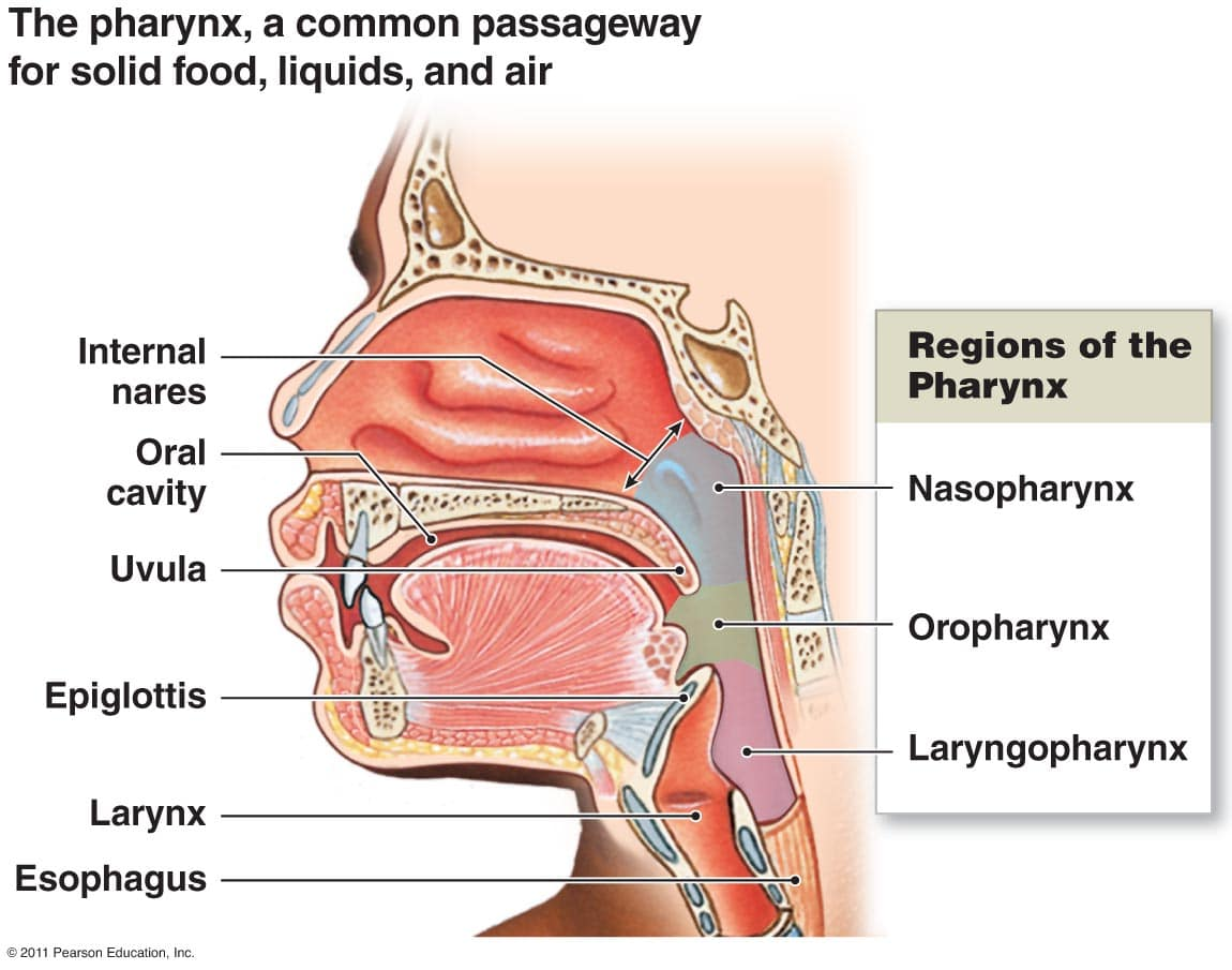 Dry Throat Diagram 8untainmedics