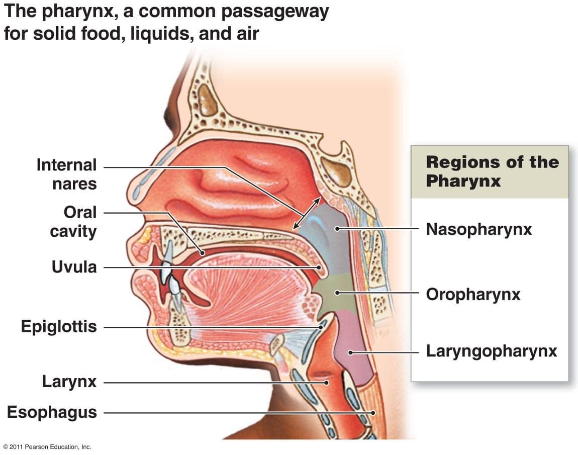 Dry Throat Diagram Layout Wiring Diagrams