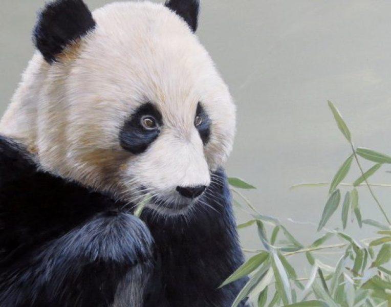 Panda_T-Isaac