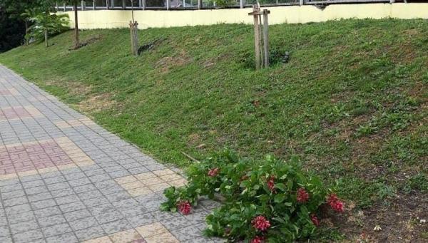 В Новороссийске разыскивают вандалов, сломавших цветущие ...