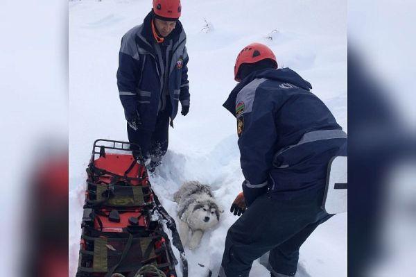 Спасатели помогли замерзающей в снегу собаке с переломом лапы