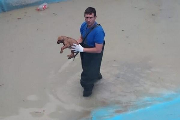 В Новороссийске спасатели достали щенка, упавшего в ...