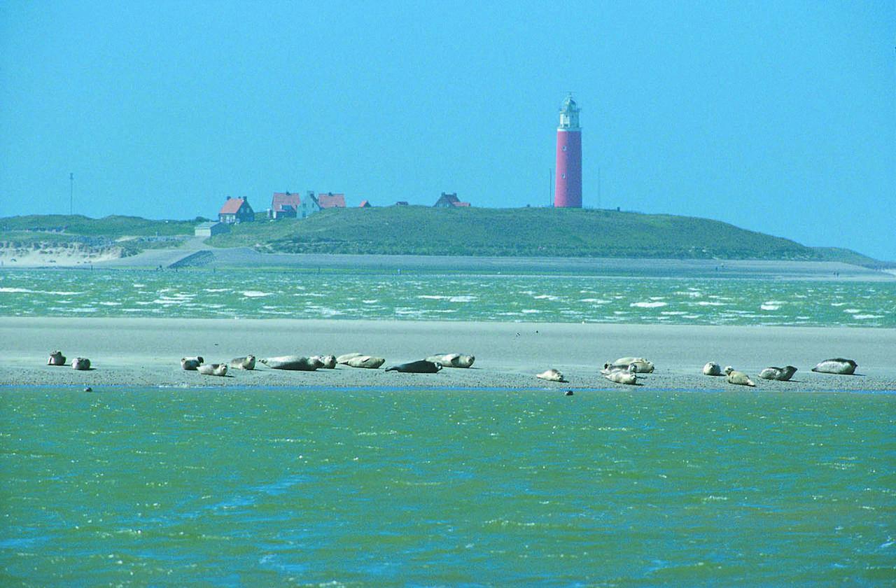 Texel Nordseeinsel Niederlande Familienauszeit Reisen mit Kindern Familienurlaub Meer Strand Seehunde