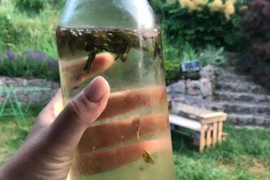 cold brew herbata