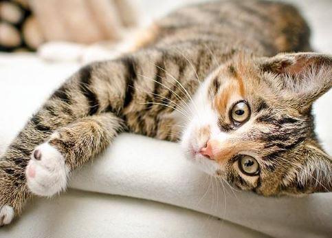 5 Cara Merawat Kucing Kampung