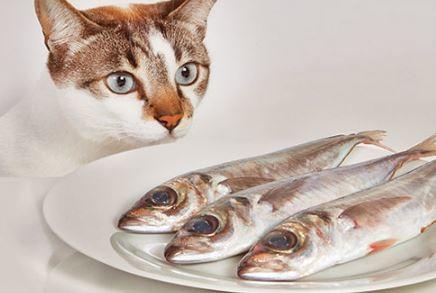 ikan-makanan-kucing 10 Makanan Kucing Yang Bagus Untuk Kesehatan