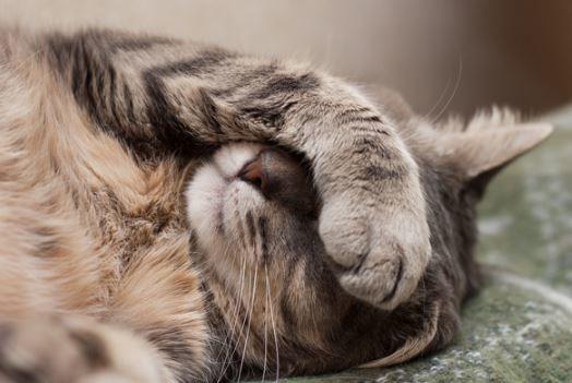 10 Ciri Ciri Kucing Lagi Sakit