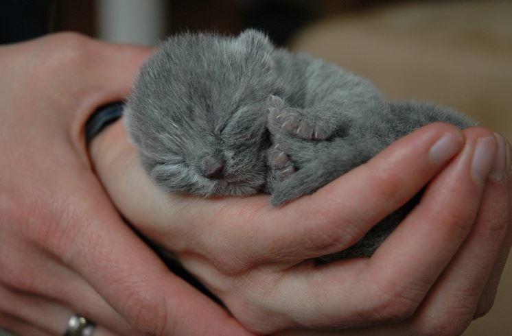 10 Tips Cara Merawat Anak Kucing Baru Lahir