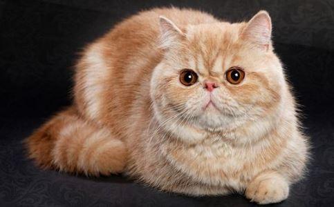 Jenis Jenis Kucing Yang Banyak Di Pelihara