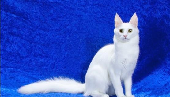 10 Kucing Lucu Sedunia, Manakah Yang Paling Lucu?