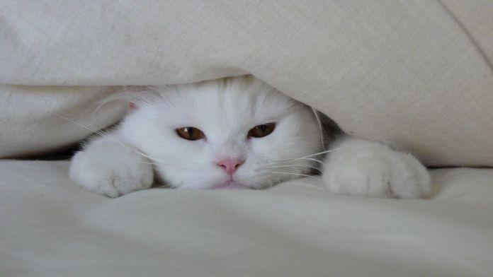 wp 1459539531470 - Alasan Kucing Senang Bersembunyi