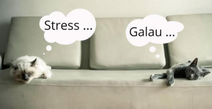 Gambar Ciri-ciri Kucing Stres