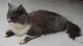 Cara Merawat Kucing Persia Bagi Adopter Baru Richeyuliaan