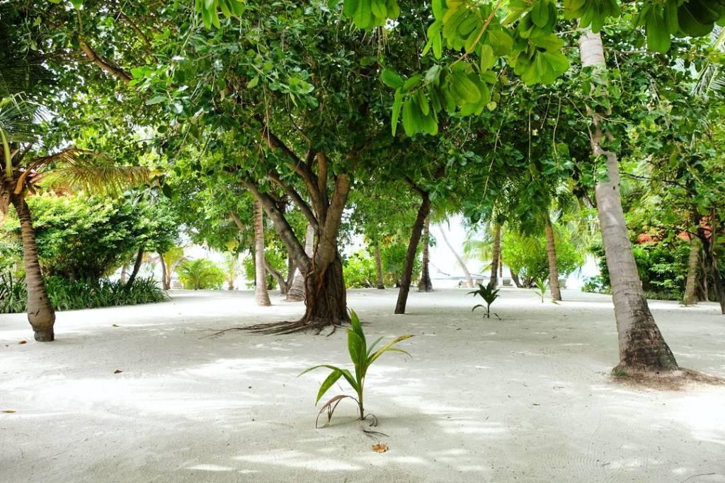 kucuk-martha-maldives-maldivler-kurumba-maldives-9