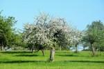 Frühling Baum_wm