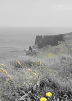 Cliffs of Moher (19)