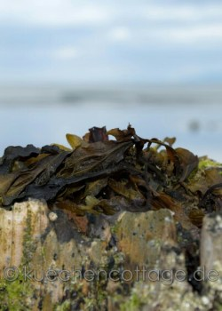 Rossbeigh Beach  (6)