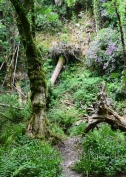 Torc Waterfall Killarney (3)
