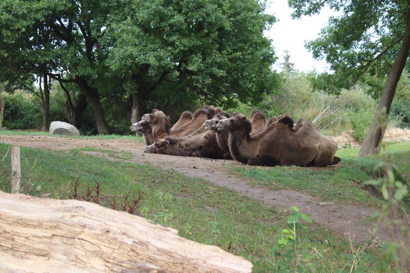 Zoo Grömitz
