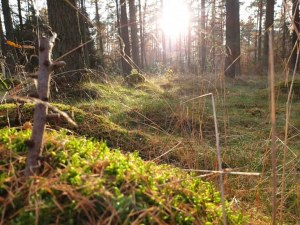Segeberger Forst