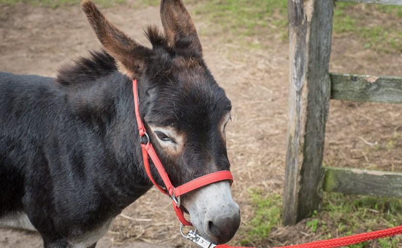 Zu Besuch auf der Eselkoppel an der Schlei
