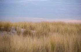 Dünengebiet Meijendel