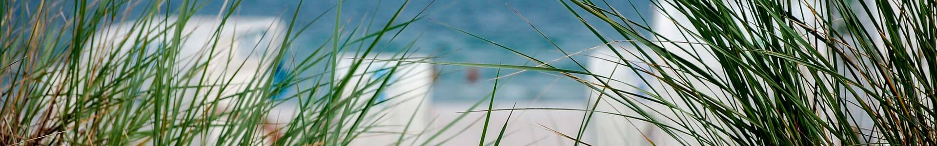 Strandkörbe an der Küste