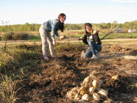 Audrie Lathrop (left) and Sarah Kraus dig up some Zinn White Sweet potatoes at the farm.