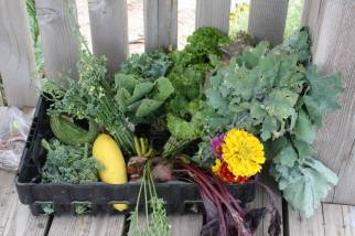 Some goodies from the community garden!