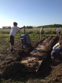 Kelly Kindscher's annual sweet potato plot gets prepped.