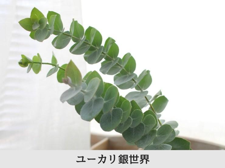 香りを楽しむ生花セット(ユーカリ・コニファー・ローズマリー)生花
