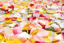 切り花のランキング – 出荷額トップ8