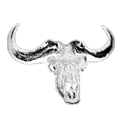 behornter Rinderschädel