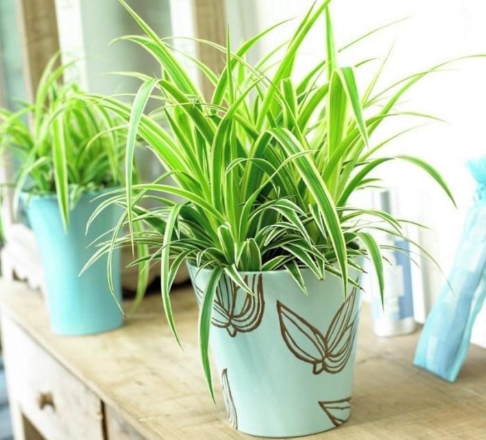 Растение для кухни