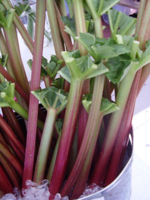 rhubarb 28