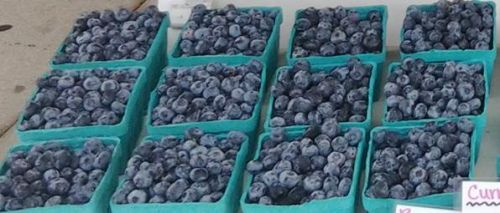 blueberries-muchin