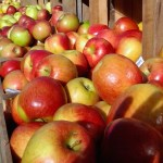 Apples from our farm
