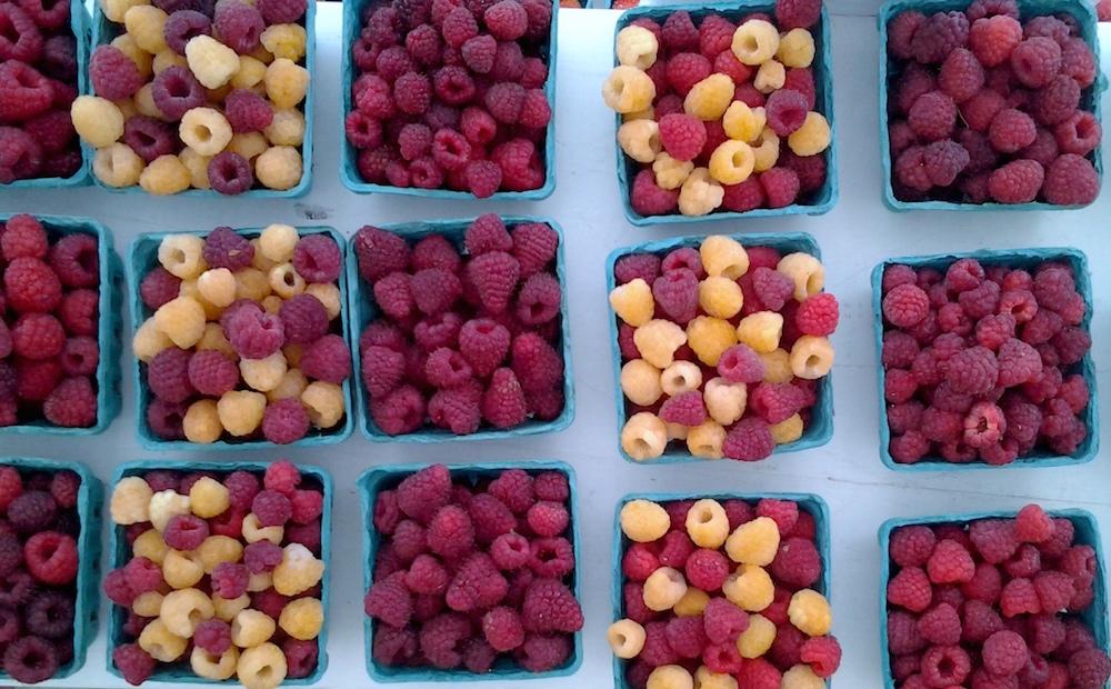 raspberry varieties 1000 x 750