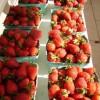 strawberries r