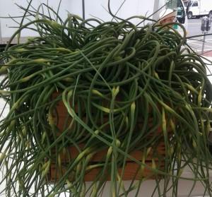 GarlicScapes2
