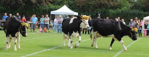 2015 Kennst Du unsere Kühe?
