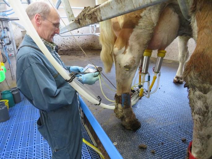 Dr. Hömberg beim messen des Vakuums während der Melkung