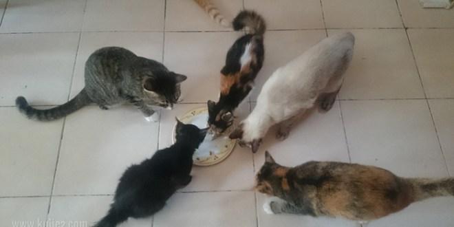 Adakah Ikan Makanan Kucing?