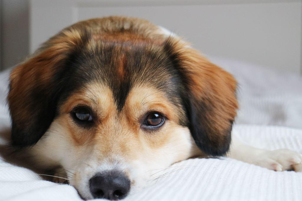 Auf den Hund gekommen // Unser Leben mit Sammy