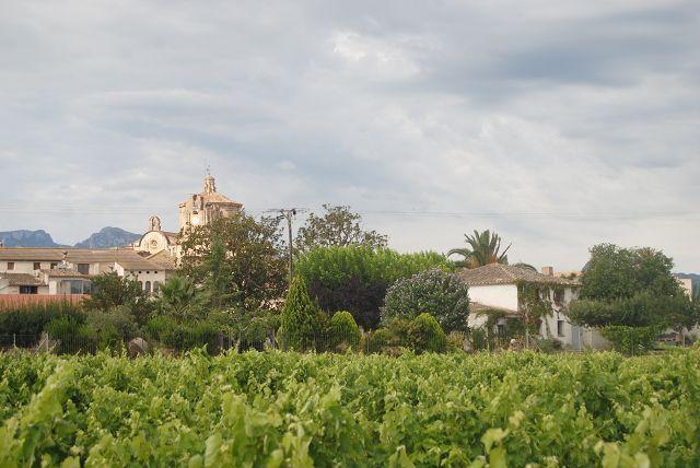 6. Juli bis 9. Juli 2014 – Ginestar am Ebro