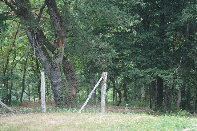 Campingplatz in Crozant - direkt am Wald. Ca. 10 Minuten Fußweg zum Fluss und 5 Minuten Fußweg in den Ort