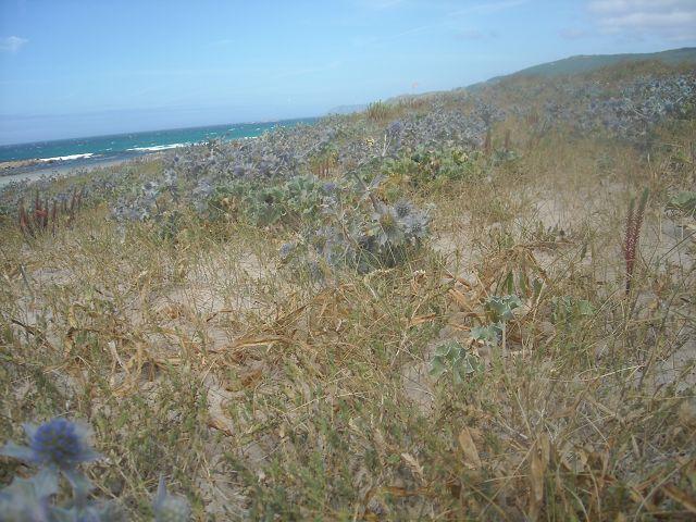 Immer noch oder wieder am Praia y Lagoa de Traba